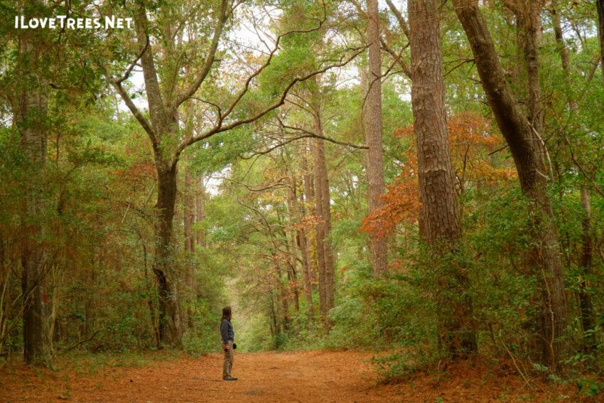 Abbey Nature Preserve