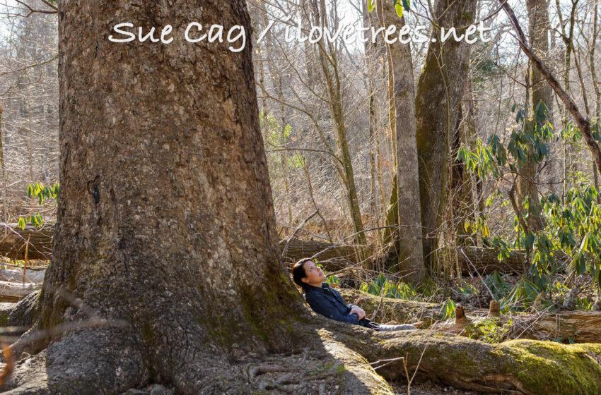 Joyce Kilmer Memorial Forest NC