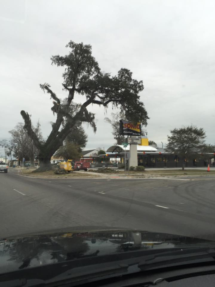 Sonic Oak in the process of being cut down