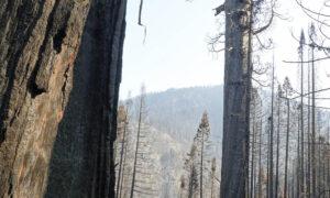 Alder Creek Castle Fire Sequoia Crest