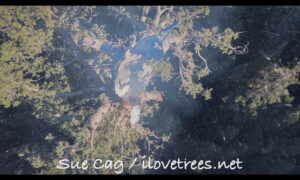 Alder Creek Grove Castle Fire