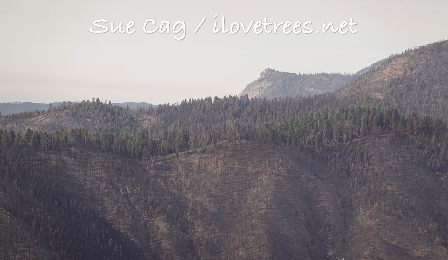 Mountain Home Grove after Castle fire