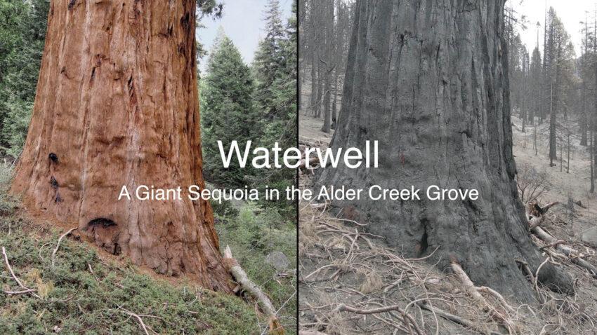Waterwell Video Screen Capture