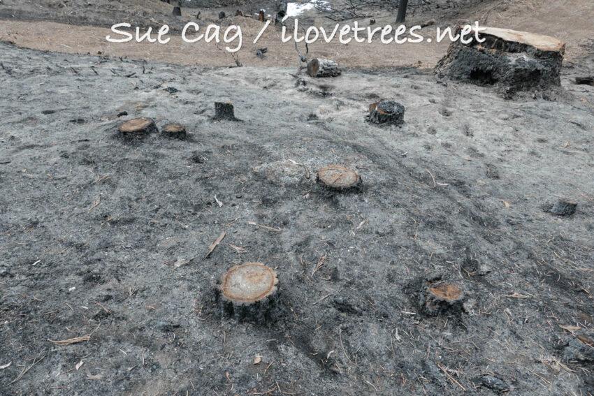 Save the Redwoods Logging