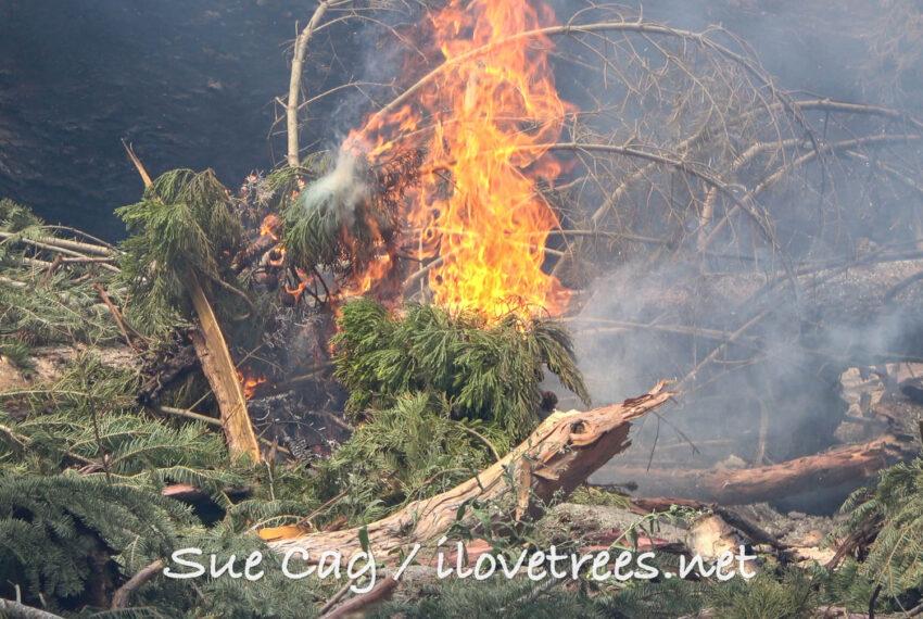 Whitethorn Castle Fire Alder Creek
