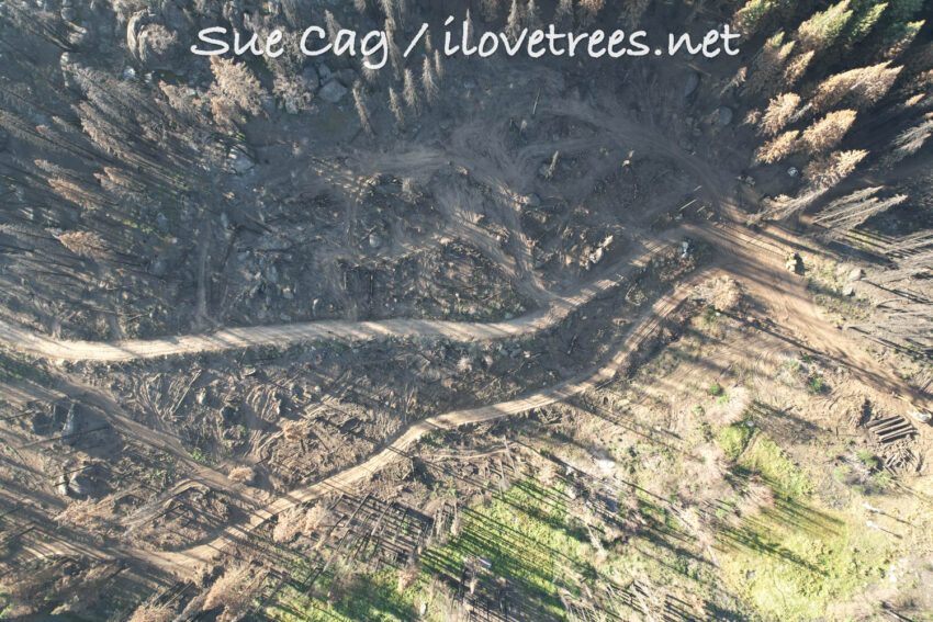 Save the Redwoods Logging Clearcut